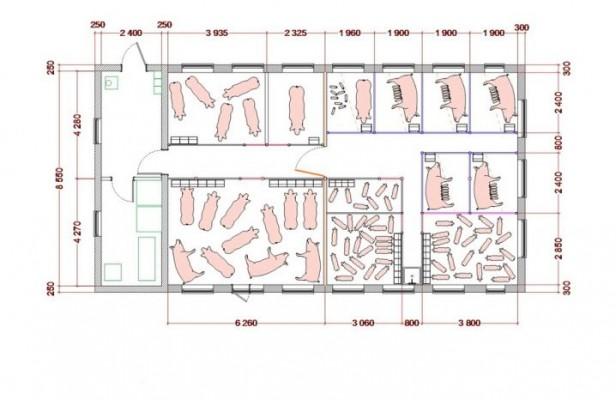 возможные размеры помещения для свиней