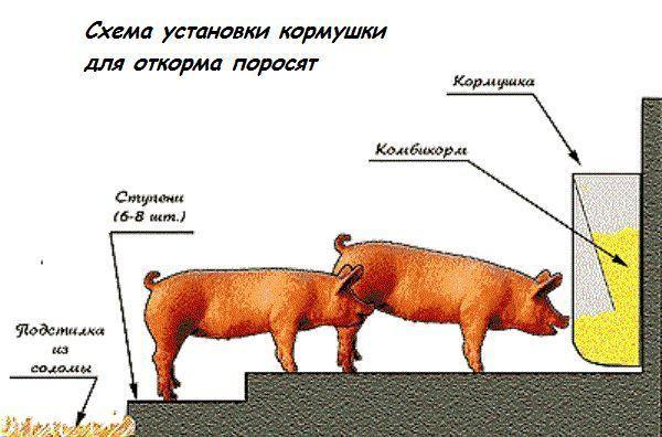 установка кормушек для свиней