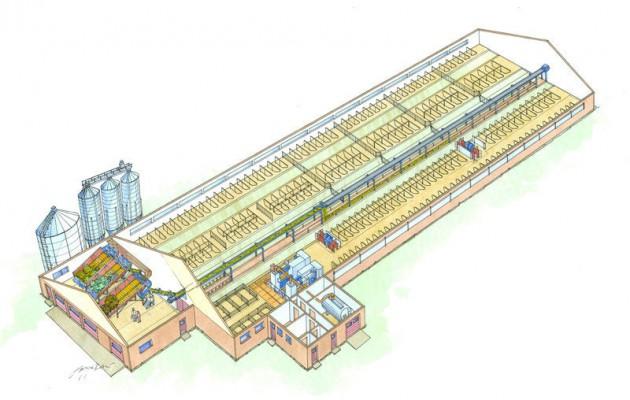 молочная ферма на 500 голов